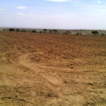 Section of the ploughed land 1